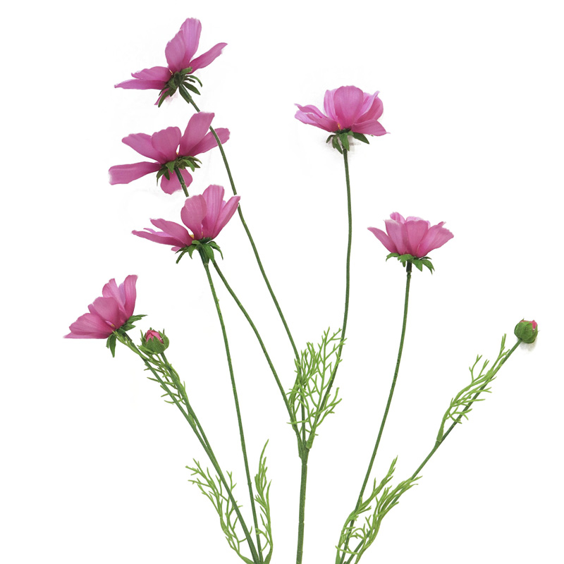Cosmos Orion pink 92cm